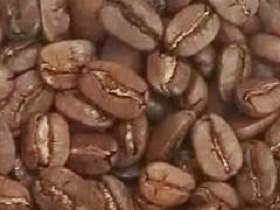 古巴藍山-咖啡豆-咖啡熟豆區